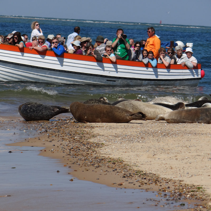 Beans Seal Trips - Why not join us on one of our daily boat trips when you visit North Norfolk and see the SEALS & BIRDS in their natural environment at BLAKENEY POINT.