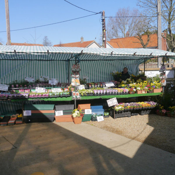 Lilac Nurseries, Burnham Deepdale, Norfolk - Florists - Appearing at Dalegate Market most Sundays throughout the year, with their wonderful selection of plants and other gardening items. | Brancaster Staithe & Burnham Deepdale, North Norfolk Coast